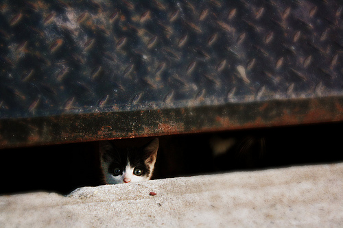 feral kitten, Alica Mckenna-Johnson CocteauBoy, Kitten